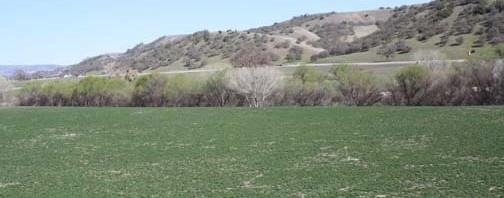 Cagliero-Ranch-504x198